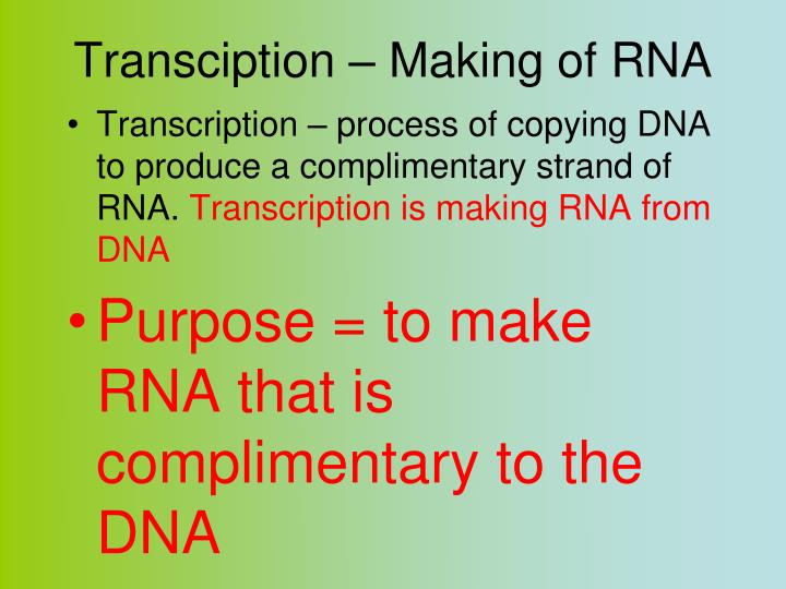 Transciption – Making of RNA