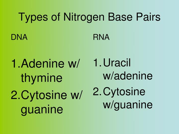 Types of Nitrogen Base Pairs