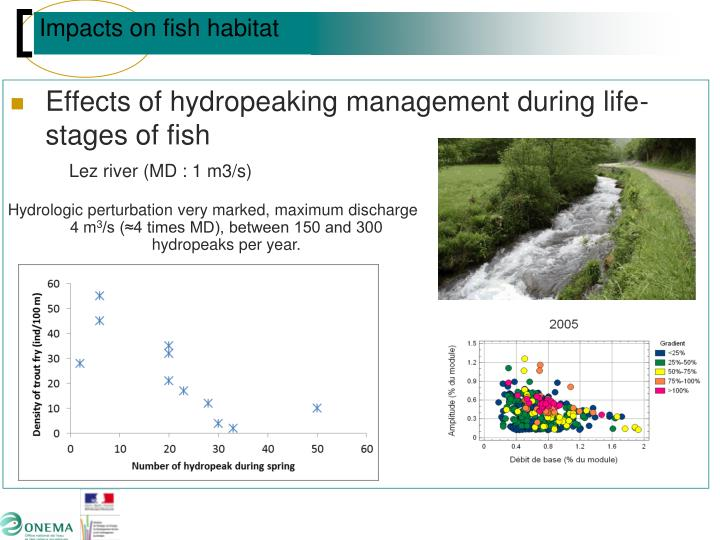 Effects of hydropeaking management during life-stages of fish