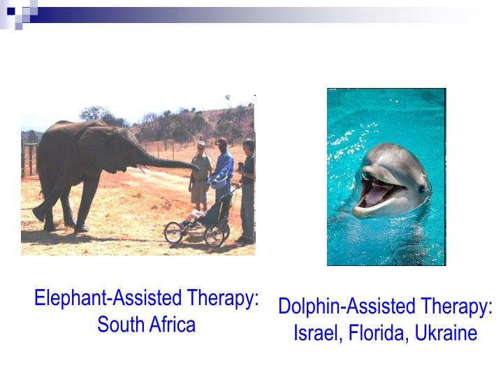 Elephant-Assisted Therapy:   South Africa