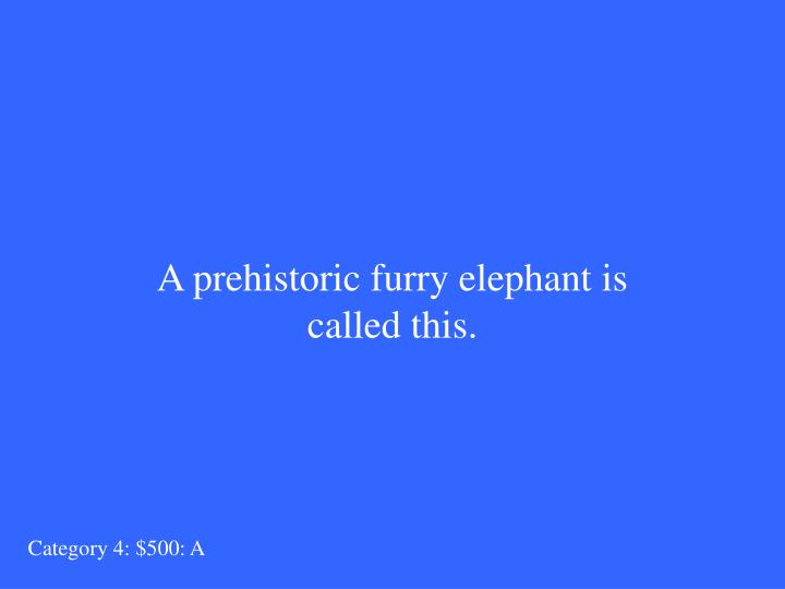A prehistoric furry elephant is called this.