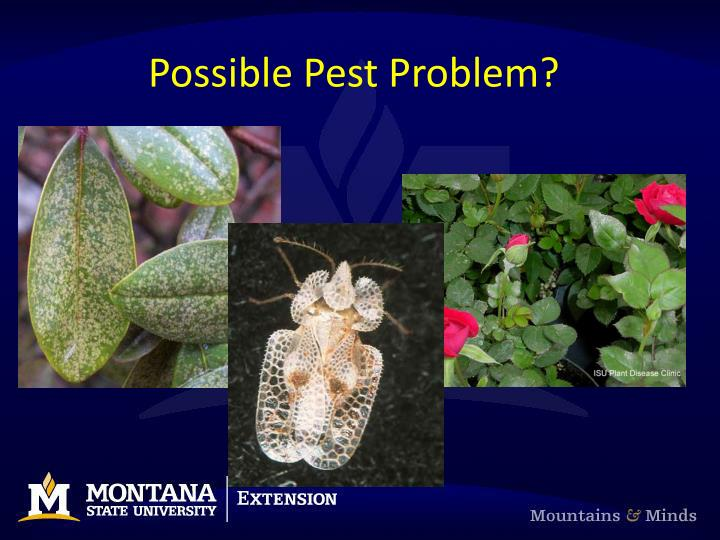 Possible Pest Problem?