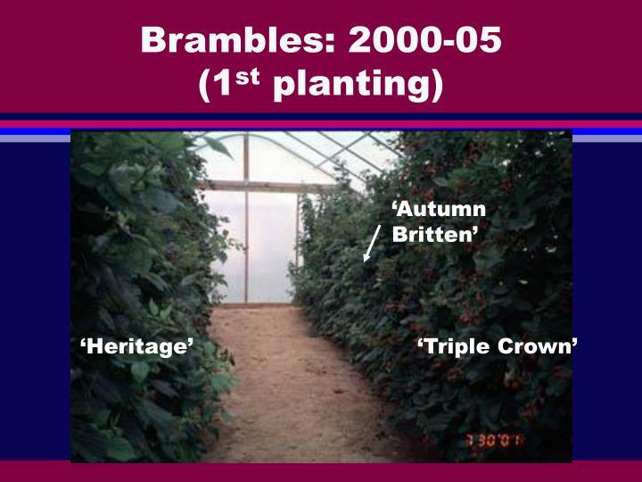 Brambles: 2000-05