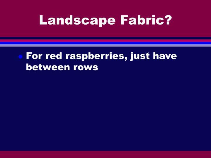 Landscape Fabric?