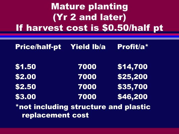 Mature planting