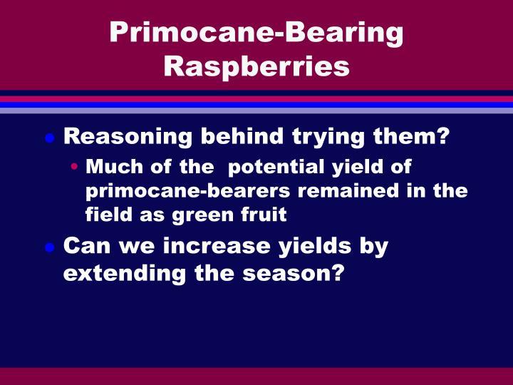 Primocane-Bearing Raspberries