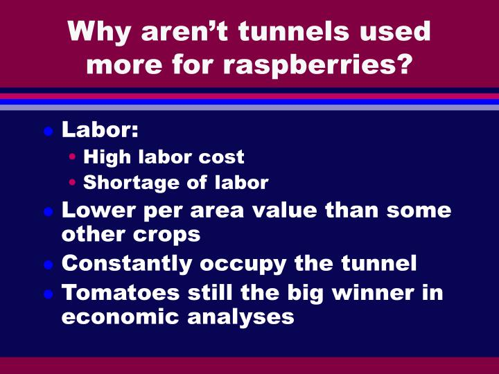 Why aren't tunnels used more for raspberries?