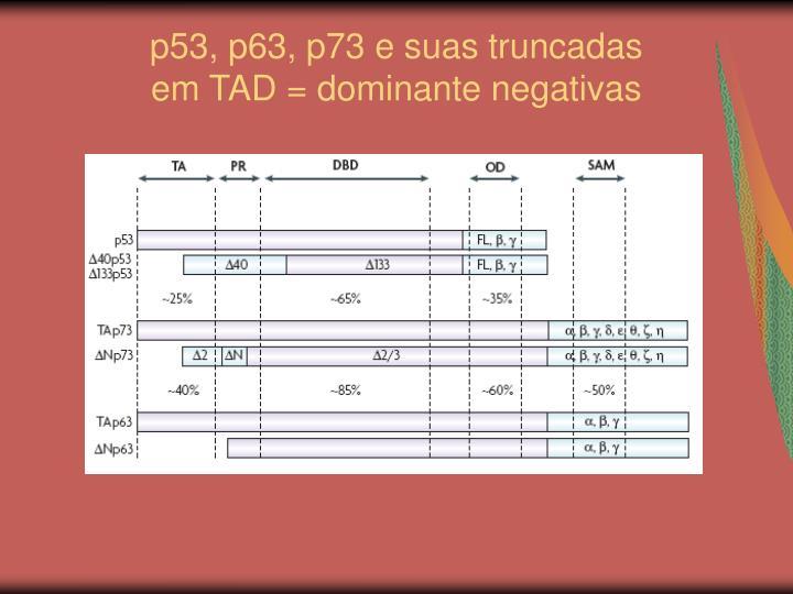 p53, p63, p73 e suas truncadas