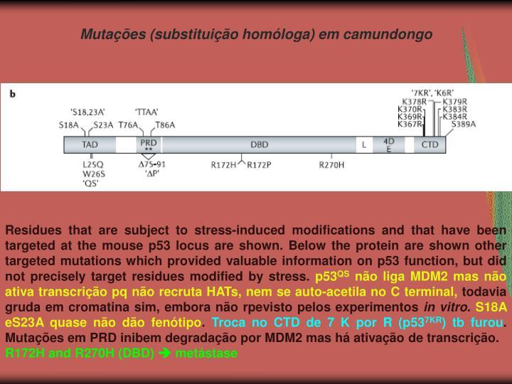 Mutações (substituição homóloga) em camundongo