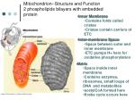 mitochondrion structure and function 2 phospholipids bilayers with embedded protein
