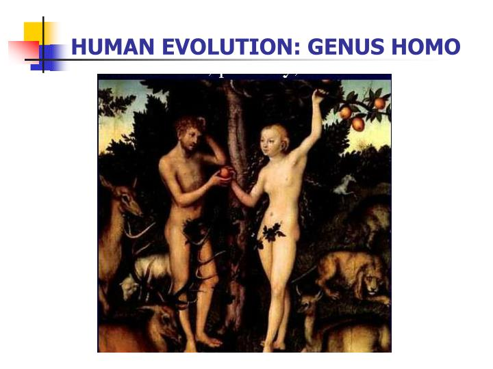 Human evolution genus homo