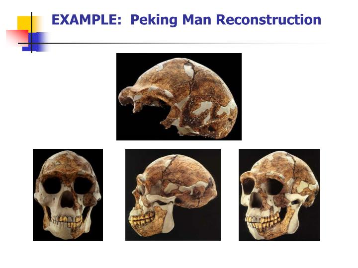EXAMPLE:  Peking Man Reconstruction
