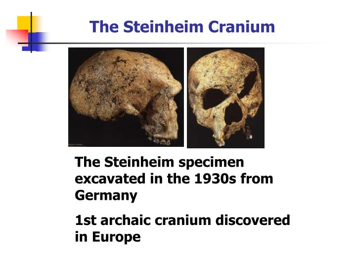 The Steinheim Cranium