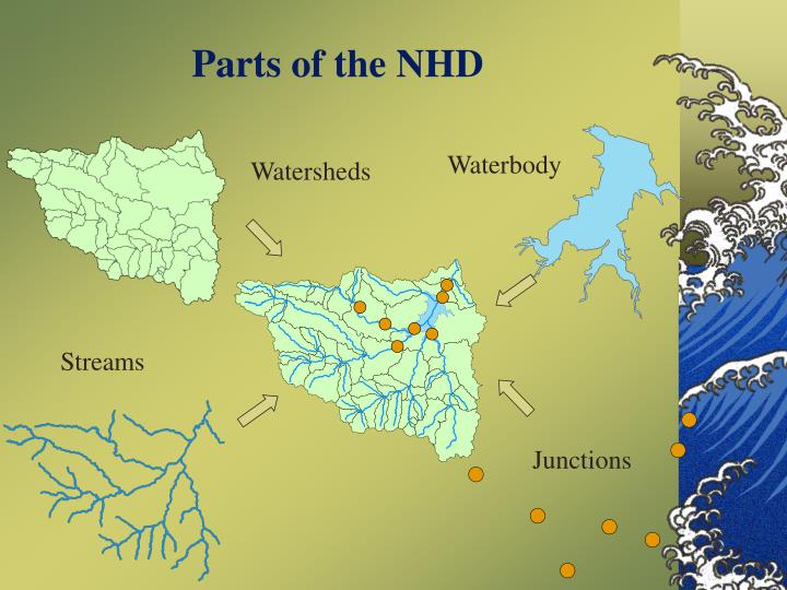 Parts of the nhd