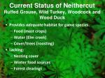 current status of neithercut ruffed grouse wild turkey woodcock and wood duck