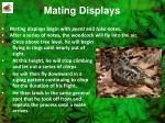 mating displays
