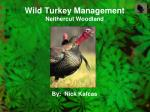 wild turkey management neithercut woodland