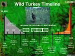 wild turkey timeline