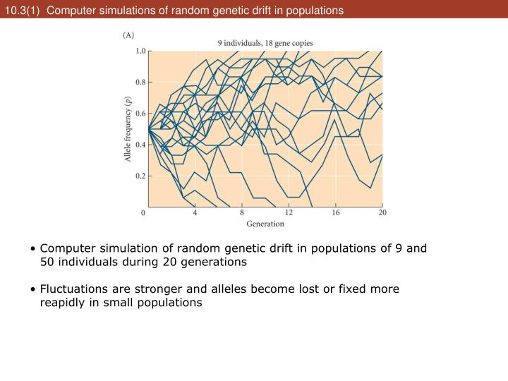 10.3(1)  Computer simulations of random genetic drift in populations