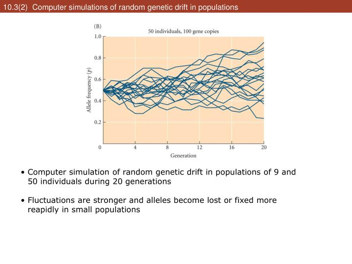 10.3(2)  Computer simulations of random genetic drift in populations