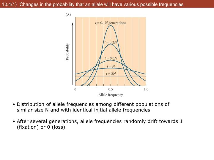 10.4(1)  Changes in the probability that an allele will have various possible frequencies