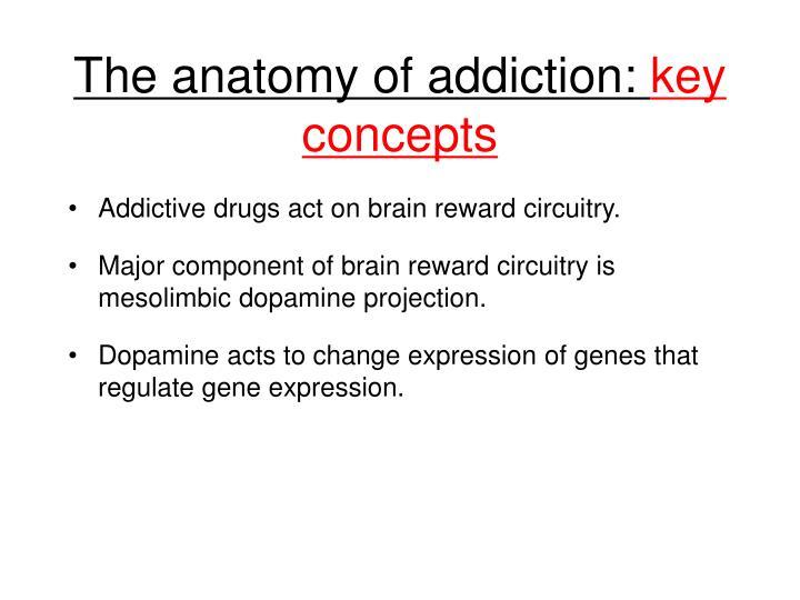 The anatomy of addiction:
