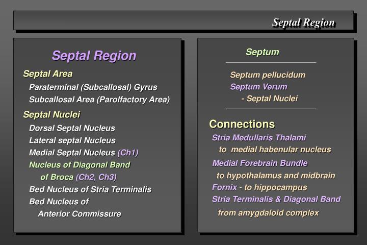 Septal Region