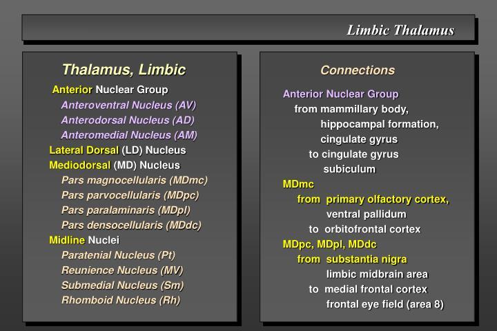 Limbic Thalamus