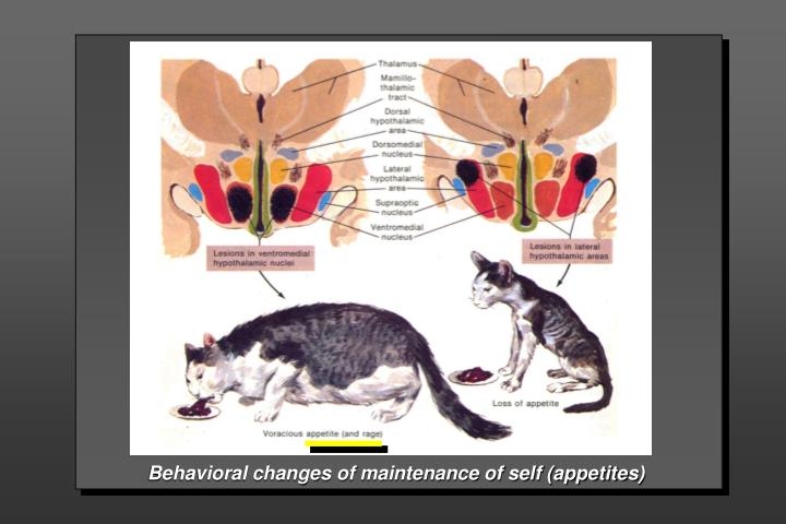 Behavioral changes of maintenance of self (appetites)