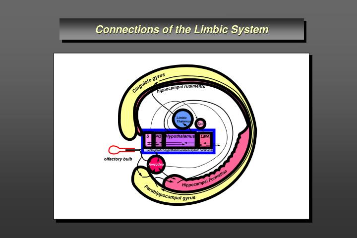 Connections of the Limbic System