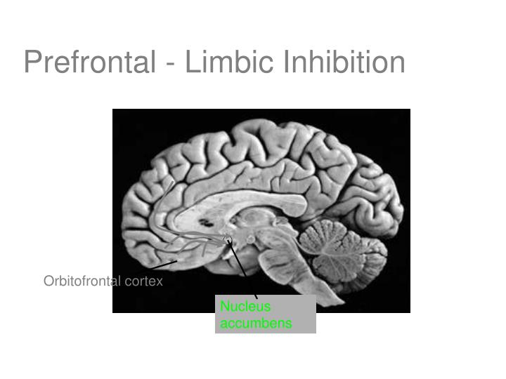 Prefrontal - Limbic Inhibition