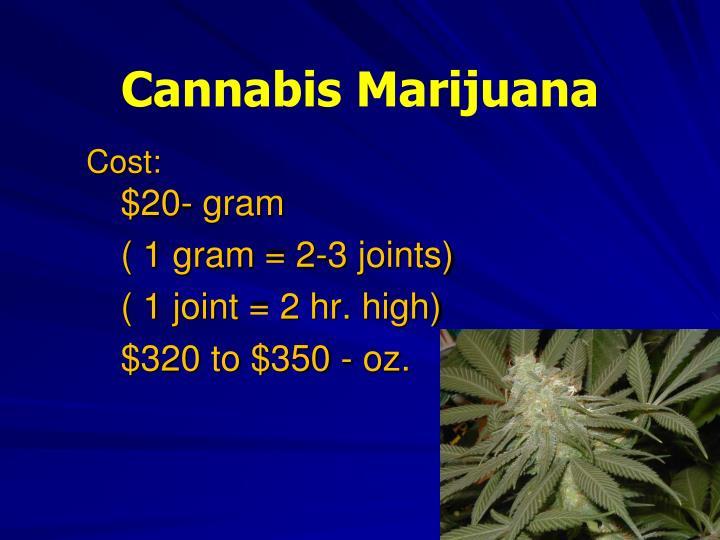 Cannabis Marijuana