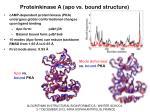 proteinkinase a apo vs bound structure
