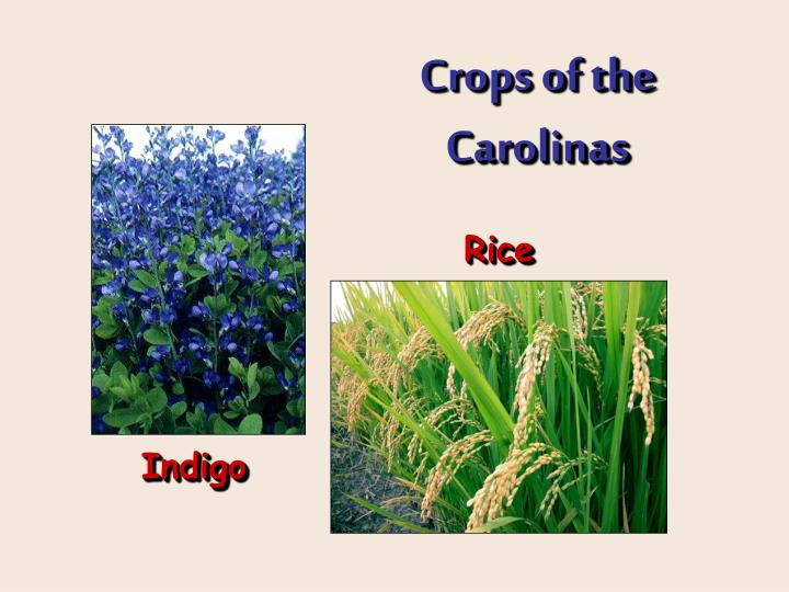 Crops of the