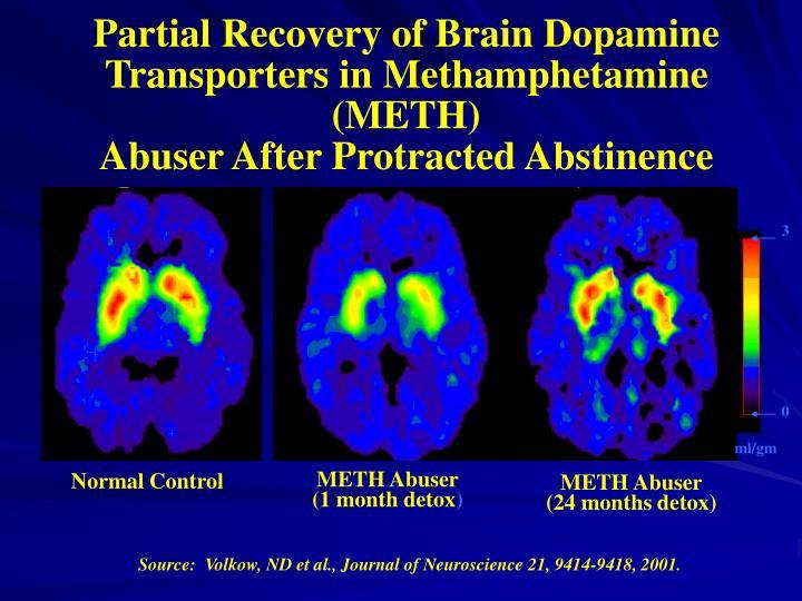 Partial Recovery of Brain Dopamine Transporters in Methamphetamine (METH)