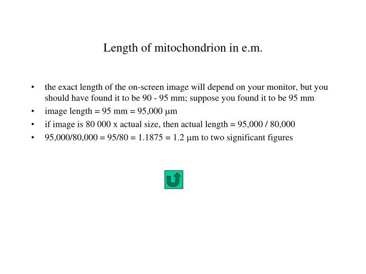 Length of mitochondrion in e.m.