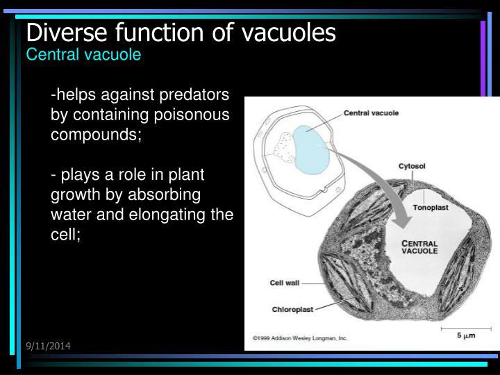 Diverse function of vacuoles