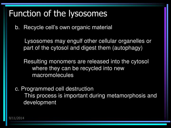 Function of the lysosomes