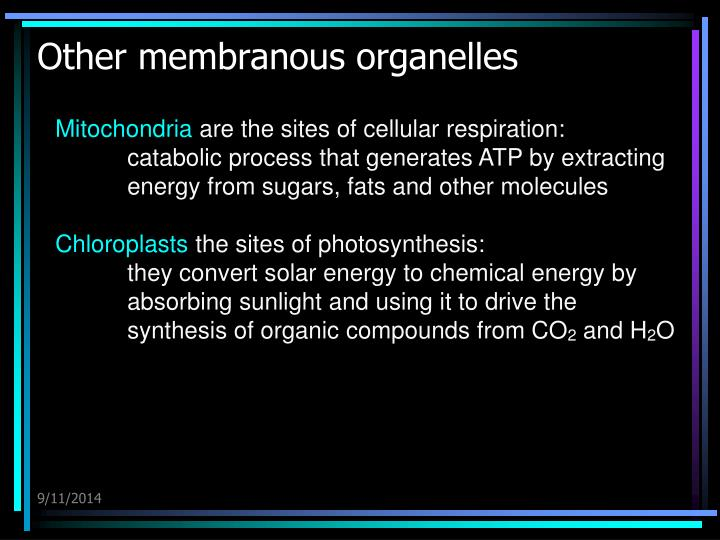Other membranous organelles