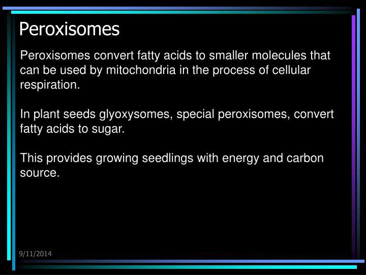 Peroxisomes
