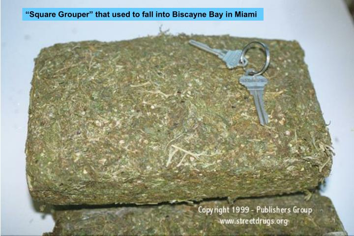 """""""Square Grouper"""" that used to fall into Biscayne Bay in Miami"""