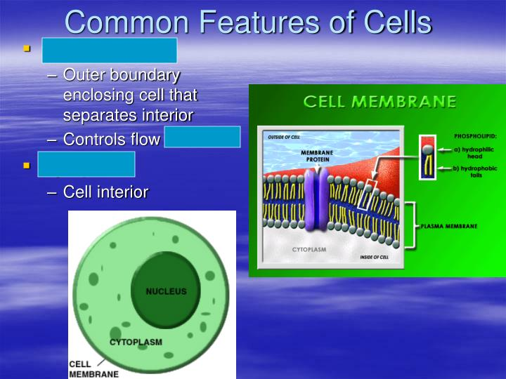 Common Features of Cells