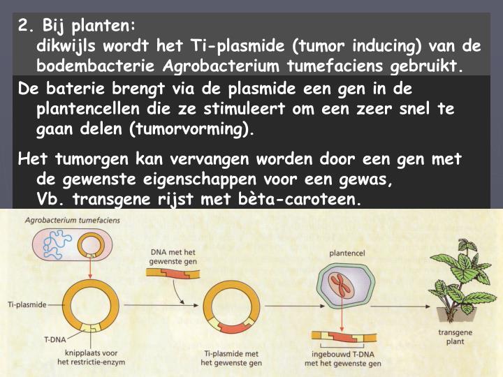 2. Bij planten:                                                 dikwijls wordt het Ti-plasmide (tumor inducing) van de bodembacterie Agrobacterium tumefaciens gebruikt.