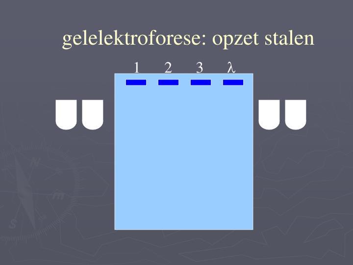 gelelektroforese: opzet stalen