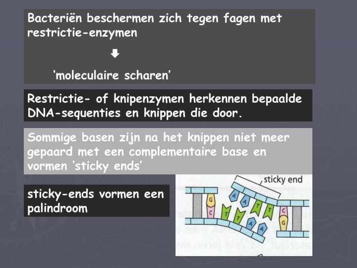 Bacteriën beschermen zich tegen fagen met restrictie-enzymen