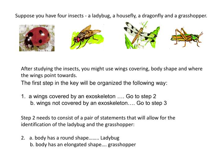 Suppose you have four insects - a ladybug, a housefly, a dragonfly and a grasshopper.
