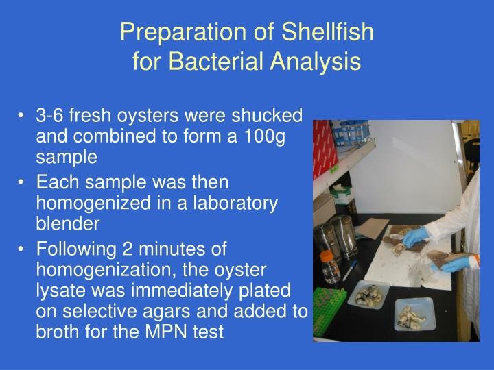 Preparation of Shellfish