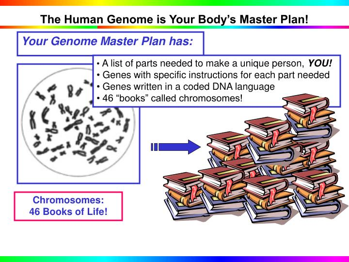 The Human Genome is Your Body's Master Plan!