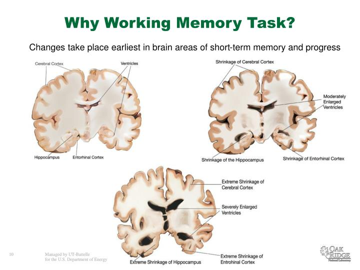 Why Working Memory Task?