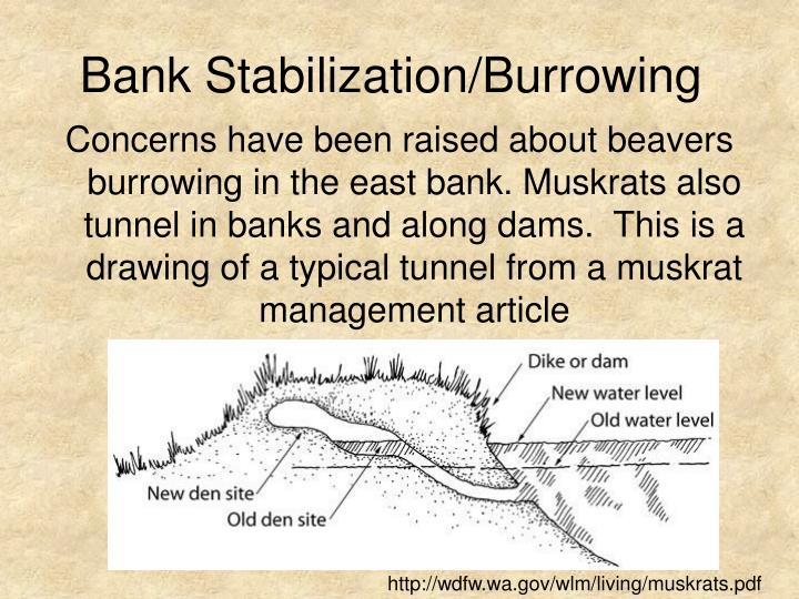 Bank Stabilization/Burrowing